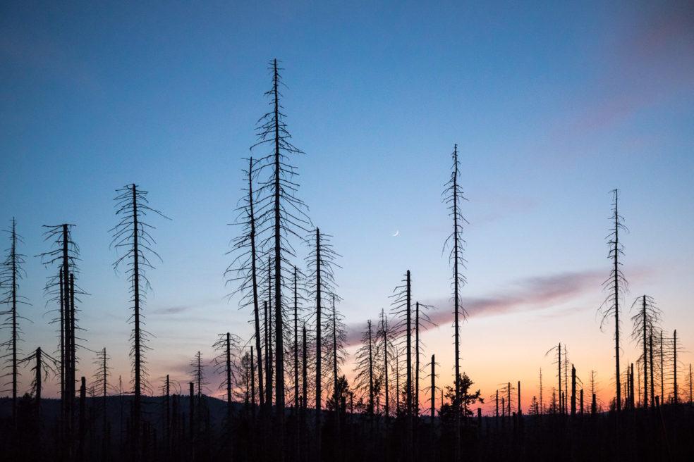 Waldsterben in Deutschland